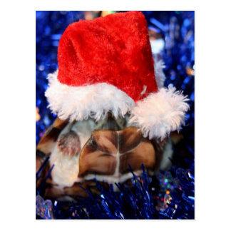 Postal Tortuga de almizcle Razorbacked, gorra de Santa de