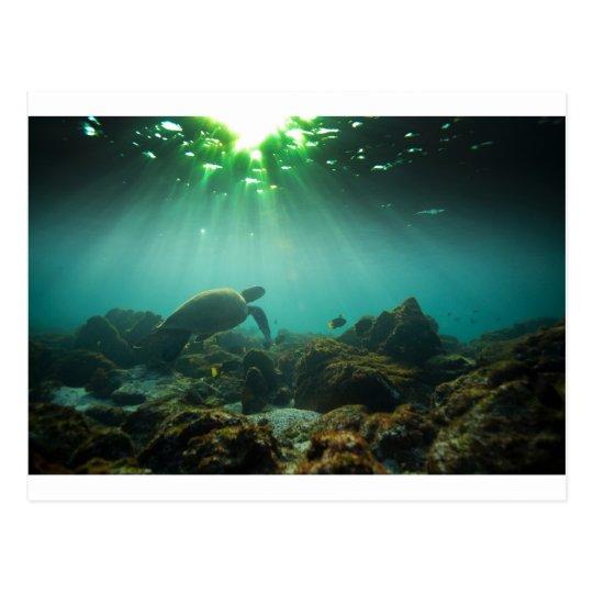 Postal Tortuga de mar verde de la laguna del océano