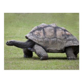 Postal Tortuga gigante en hierba