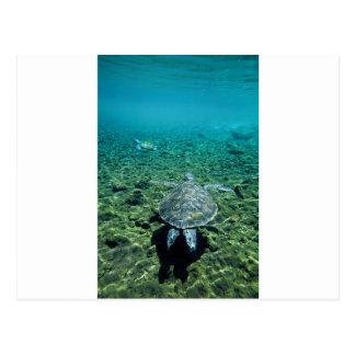 Postal Tortuga verde Samoa Occidental subacuática