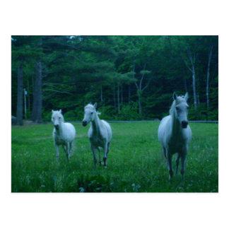 Postal Tres caballos blancos