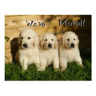 Postal Tres perritos del golden retriever. Nos hemos