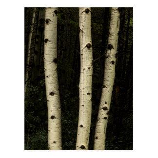 Postal Tres pilares del bosque