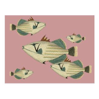 Postal Triggerfish