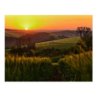 Postal Trigo de la agricultura de la puesta del sol