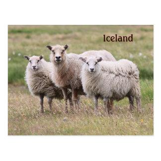 Postal Trío de ovejas en Islandia
