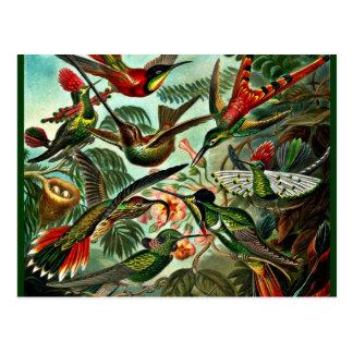 Postal Trochilidae - colibríes