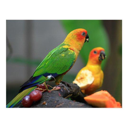 Postal tropical del pájaro
