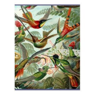 Postal Tropical exótico del vintage del arte vibrante de