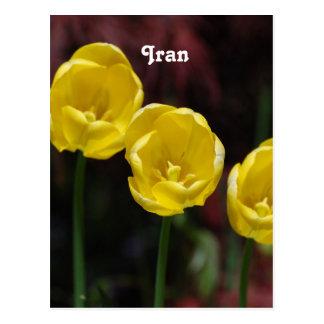 Postal Tulipán iraní