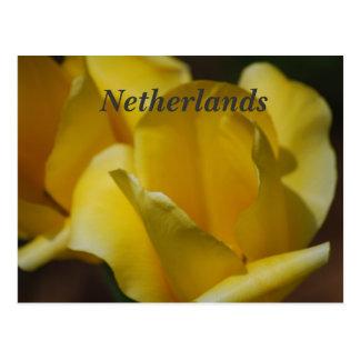 Postal Tulipanes en los Países Bajos