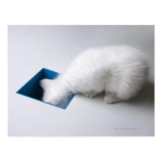 Postal Un gatito joven estira su cabeza abajo de un