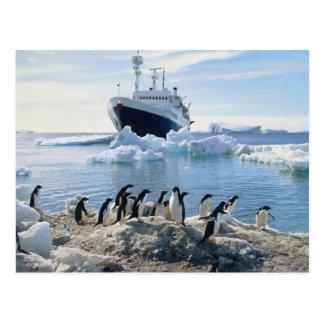 Postal Un grupo de pingüinos que se colocan en una playa