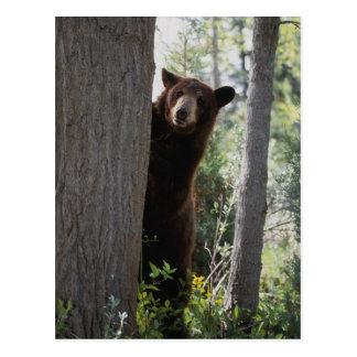 Postal Un oso de canela