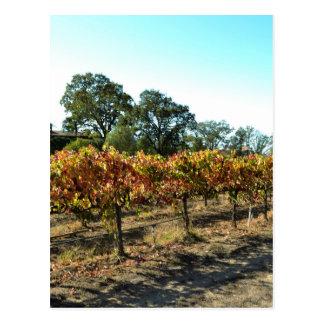 Postal Uvas de vino en el condado de Mendocino,