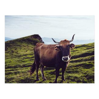 Postal Vaca bovina en paisaje hermoso