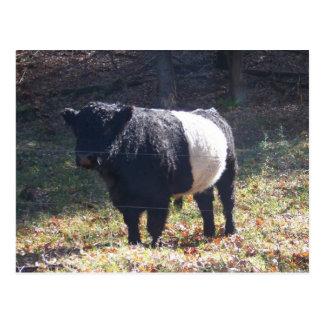 Postal Vaca de Oreo