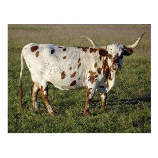 Postal Vaca del fonolocalizador de bocinas grandes de