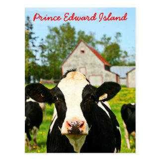 Postal Vaca lechera de Isla del Principe Eduardo