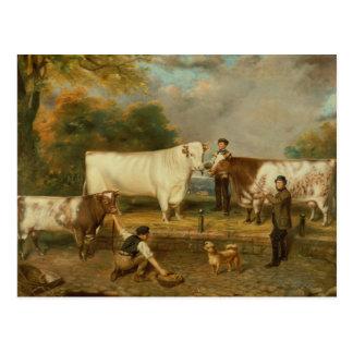 Postal Vacas con un ganadero