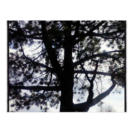 Postal vaga del árbol de pino