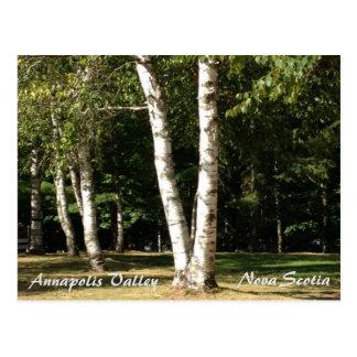 Postal Valle de Annapolis, Nueva Escocia, árboles de