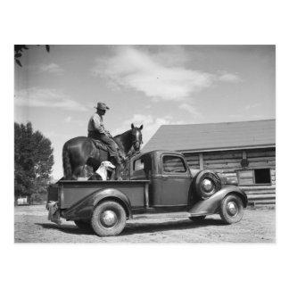 Postal Vaquero con el caballo en un camión