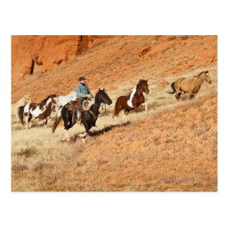 Postal Vaquero que reúne caballos