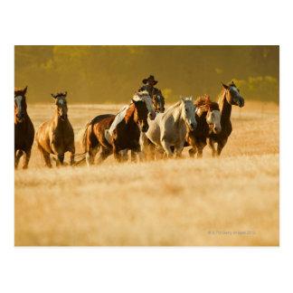 Postal Vaquero que reúne los caballos 2