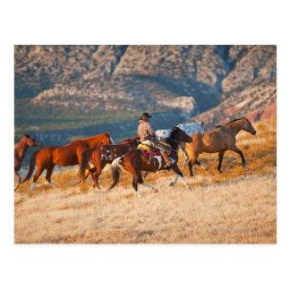 Postal Vaquero que reúne los caballos salvajes 2