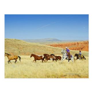 Postal Vaqueros que reúnen caballos