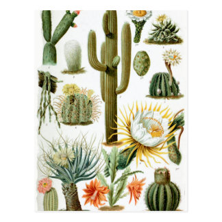 Postal Various_Cactaceae