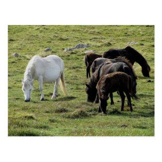 Postal Verano de Grazeing de los potros de Dartmoor