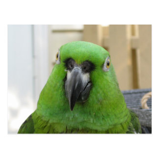 Postal verde del loro de Panamá el Amazonas