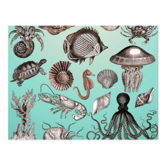Postal Vida marina