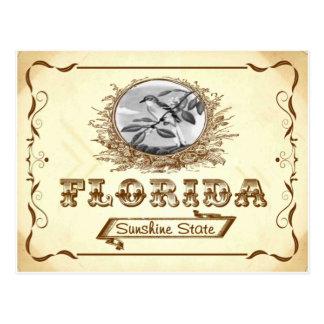 Postal vieja 1910 de la Florida de la apariencia