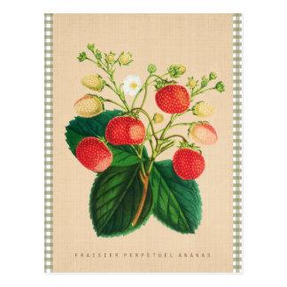 Postal Vintage botánico - piña perpetua de Fraisier