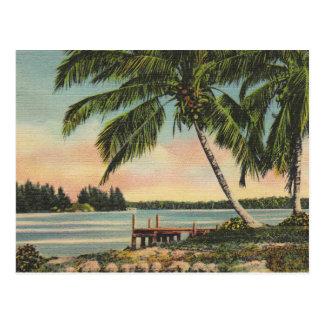 Postal vintage de las palmeras