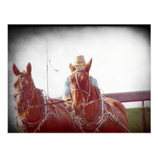 Postal Vintage del equipo de dos Amish del caballo falso