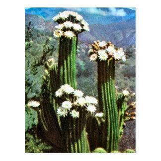 Postal Vintage la Argentina, cactus floreciente