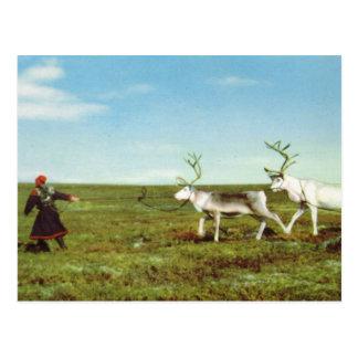 Postal Vintage Noruega, Laponia, Sami con el reno