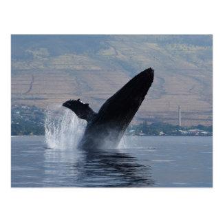 Postal violación de la ballena del humback
