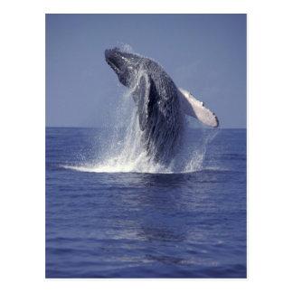 Postal Violación de la ballena jorobada (Megaptera