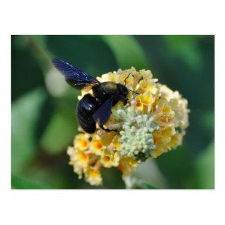 Postal violeta de la abeja de carpintero