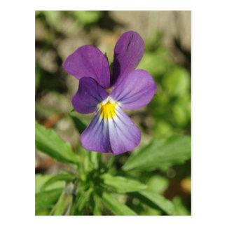 Postal violeta hermosa de la foto de la flor