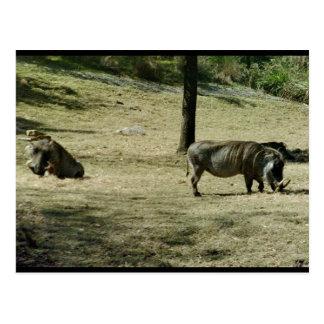 Postal Warthogs