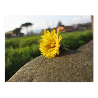 Postal Wildflower amarillo que miente en una piedra en la
