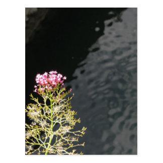 Postal Wildflowers contra la superficie del agua de un