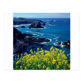 Postal Wildflowers pacíficos Mendocino de la costa costa