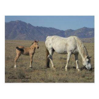 Postal Yegua y potro (caballos)